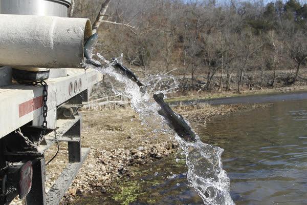 Arkansas: Trout Stocking to Continue Through Winter