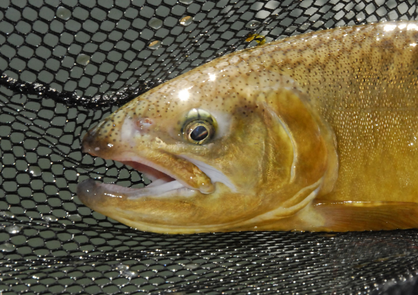Arizona: Native and Wild Trout Conference in Phoenix   Fishing Wire