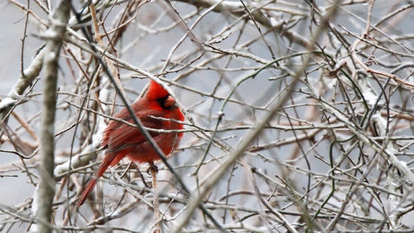 Christmas Bird Count engages everyone
