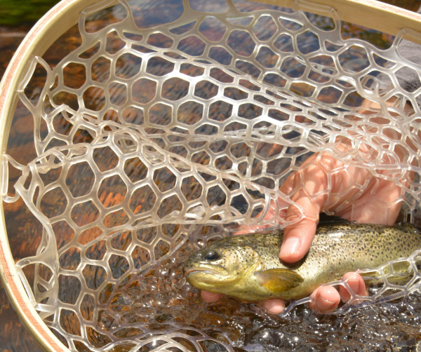 Arizona: GFD Adjusts Trout Stockings Due To Operational