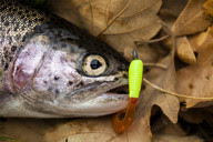 Nebraska Stocking Trout Statewide for Fall Angling Action | Fishing Wire